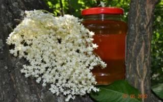 Мед из бузины рецепт польза и вред