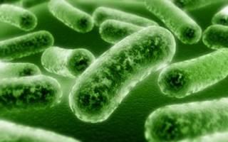 Бактериальная инфекция у детей симптомы и лечение