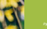 Аллергия злаковые травы лечение