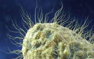 Какие антибиотики язве 12 перстной кишки