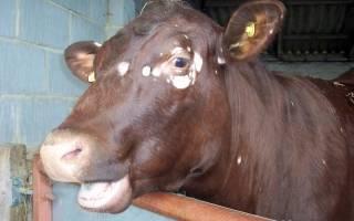 Лишай у коровы лечение в домашних условиях