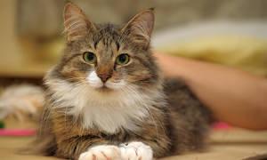 Цистит у кота симптомы и лечение