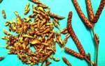 Язва 12 перстной кишки народные методы лечение