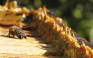 Настойка прополиса от грибка ногтей отзывы