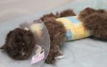 Воспаление матки у кошек симптомы и лечение
